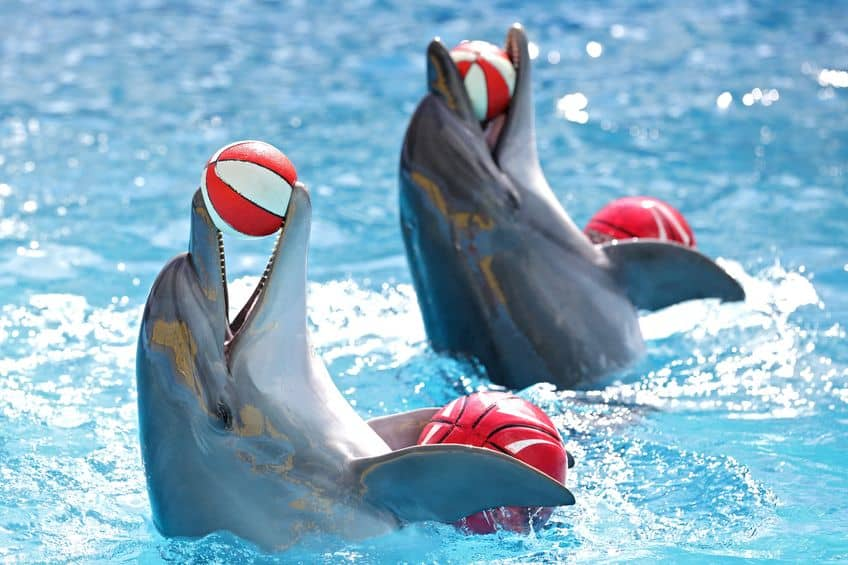using data science for dolphins